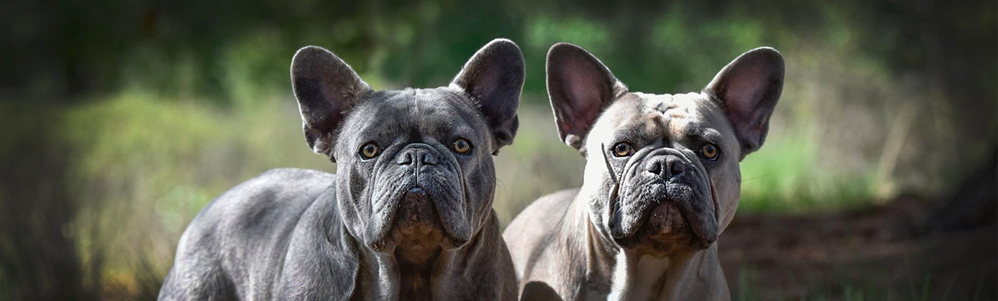Dierenfotograaf_honden fotografie_huisdieren fotograaf in Eindhoven