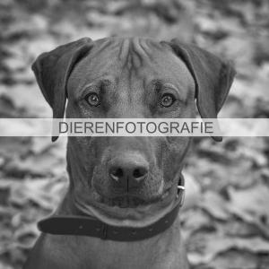Hondenfotograaf, dierenfotograaf